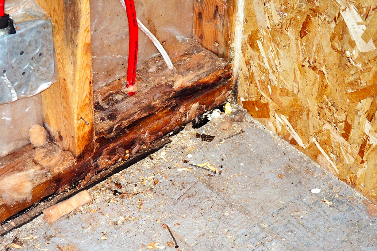 Tech Report Kill How To Kill Mold And Stay Healthy